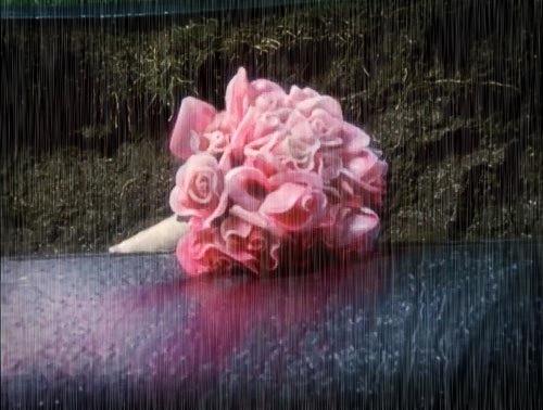 november-rain-coffin